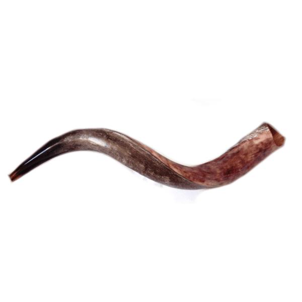 Yemenite Shofar Kudu Horn- Half Polished Mini