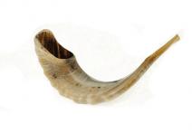 """Ram Horn Shofar Polish 18.9""""-21.7"""""""