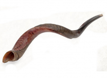 Yemenite Shofar Kudu Horn- Half Polished Large